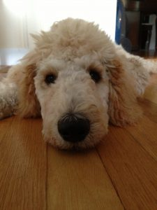 teddy-5-monthsonfloor