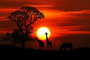 Picture of safari sunset